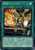 【N-Rare】運命のウラドラ[YGO_BACH-JP065]