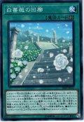 【Normal】白薔薇の回廊[YGO_20PP-JP011]